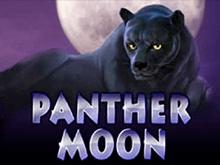Аппарат на деньги Panther Moon